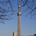 20140222_Tokyo_Simba_069.jpg