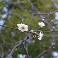 20140222_Tokyo_Simba_070.jpg