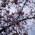 20140223_Tokyo_Simba_15.jpg