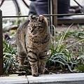 20140223_Tokyo_Simba_18.jpg