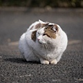 20140223_Tokyo_Simba_17.jpg