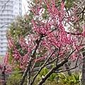 20140223_Tokyo_Simba_22.jpg