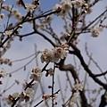 20140223_Tokyo_Simba_45.jpg