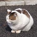 20140223_Tokyo_Z1_09.jpg