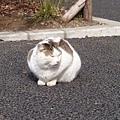 20140223_Tokyo_Z1_10.jpg