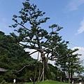 20140813_Kyushu_Simba_071.jpg