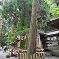 20140815_Kyushu_Simba_14.jpg