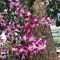 20141021_Singapore_iPhone_044.jpg