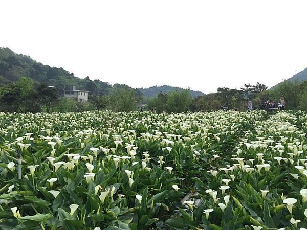 20150330_Yanmingshan_Haoyu_057.jpg