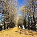 20151120_Tokyo_Bruce_135.jpg
