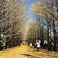 20151120_Tokyo_Bruce_137.jpg