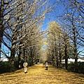 20151120_Tokyo_Bruce_147.jpg