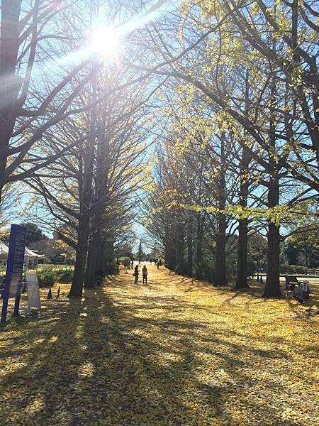 20151120_Tokyo_Bruce_156.jpg