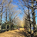 20151120_Tokyo_Bruce_165.jpg