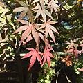 20151120_Tokyo_Bruce_186.jpg
