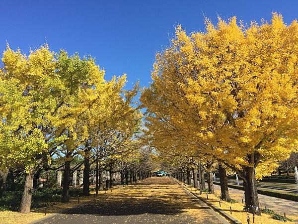 20151120_Tokyo_Bruce_248.jpg