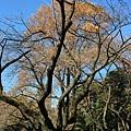20151120_Tokyo_Bruce_384.jpg
