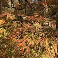 20151120_Tokyo_Bruce_440.jpg