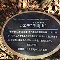 20151120_Tokyo_Bruce_447.jpg