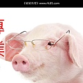 Pig_02.jpg