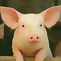 Pig_03.jpg