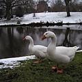 2003_Europe_Leiden_22.jpg