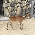 20160904_Hiroshima_133.jpg