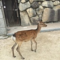 20160904_Hiroshima_132.jpg