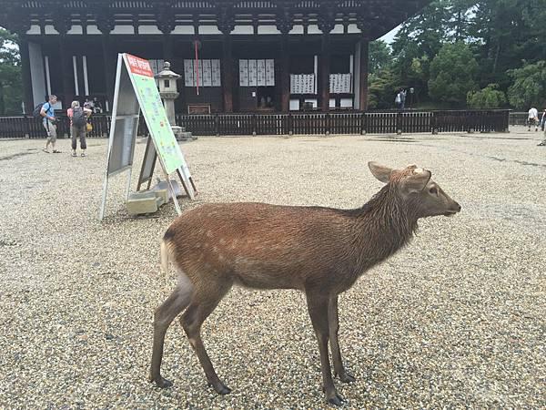 20160908_Nara_Peach_049.jpg