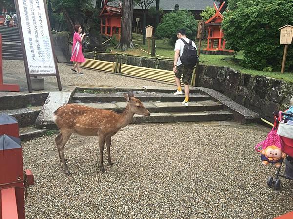 20160908_Nara_Peach_087.jpg