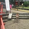 20160908_Nara_Peach_088.jpg