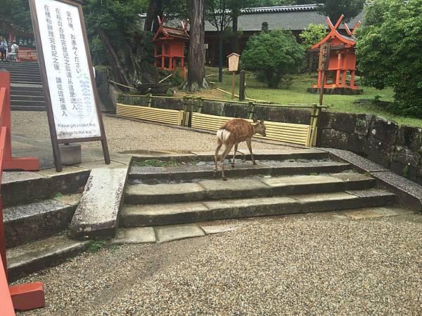 20160908_Nara_Peach_089.jpg