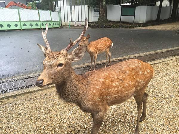 20160908_Nara_Peach_106.jpg