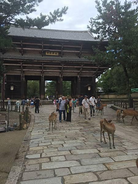 20160908_Nara_Peach_122.jpg