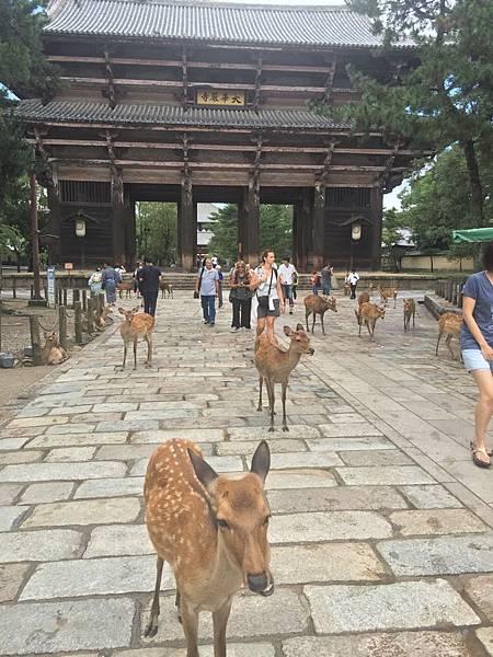 20160908_Nara_Peach_121.jpg