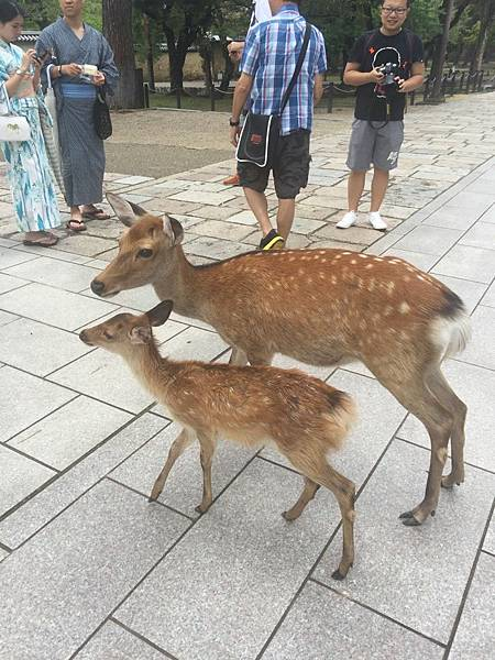 20160908_Nara_Peach_130.jpg
