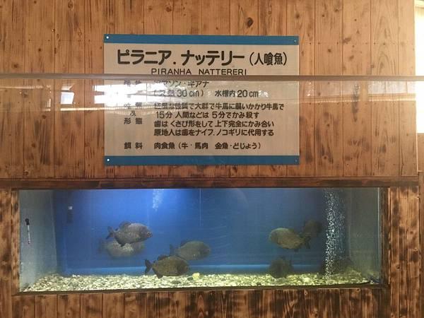 20161017_Beppu_Yufuin_140.jpg