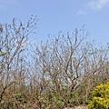 Xiaoliuqiu_20100924_072.jpg