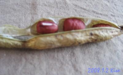 紅豆02.jpg