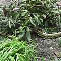 snake03.jpg