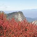 小笠原山4.JPG