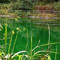 阿里山舊水庫5.jpg