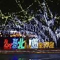 2014台北燈會花博圓山公園 (1).JPG