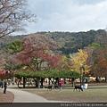 06奈良公園.JPG