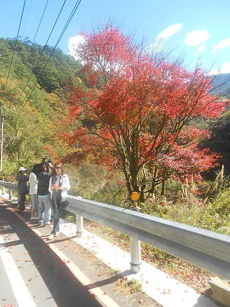 福壽山農場包車旅遊