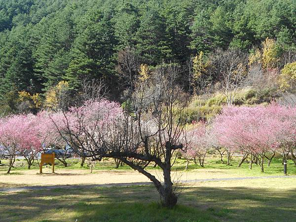 武陵農場包車旅遊