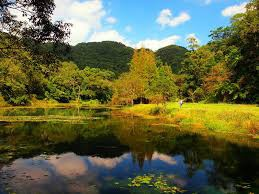 福山植物園5
