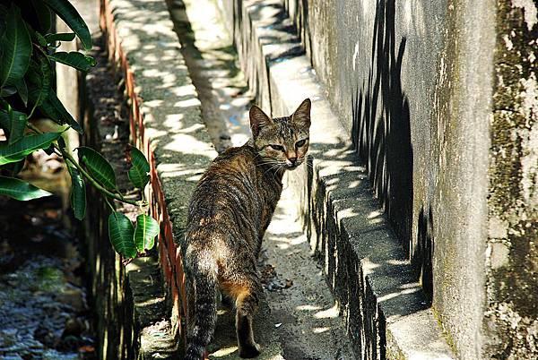 南風中的貓咪