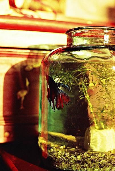 奶奶的醃製玻璃瓶