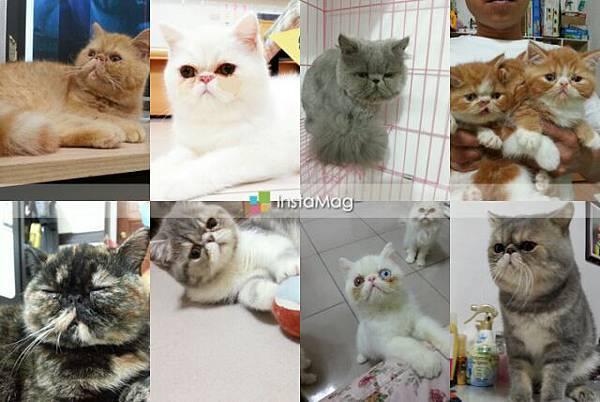 2015小貓姊姊賀年